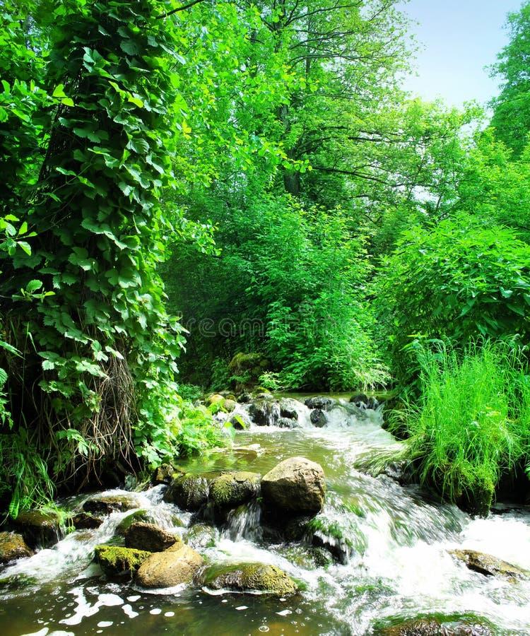 Cascada hermosa en bosque verde fotografía de archivo libre de regalías
