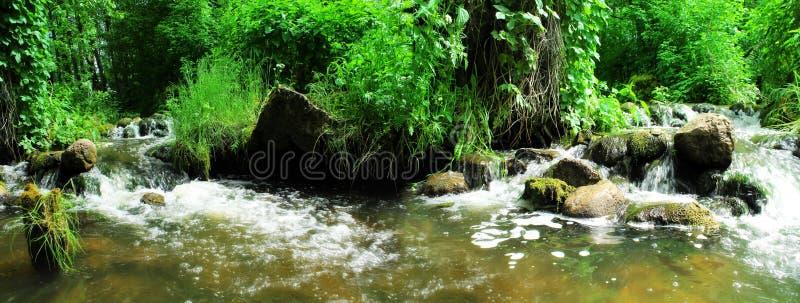 Cascada hermosa en bosque verde imagenes de archivo