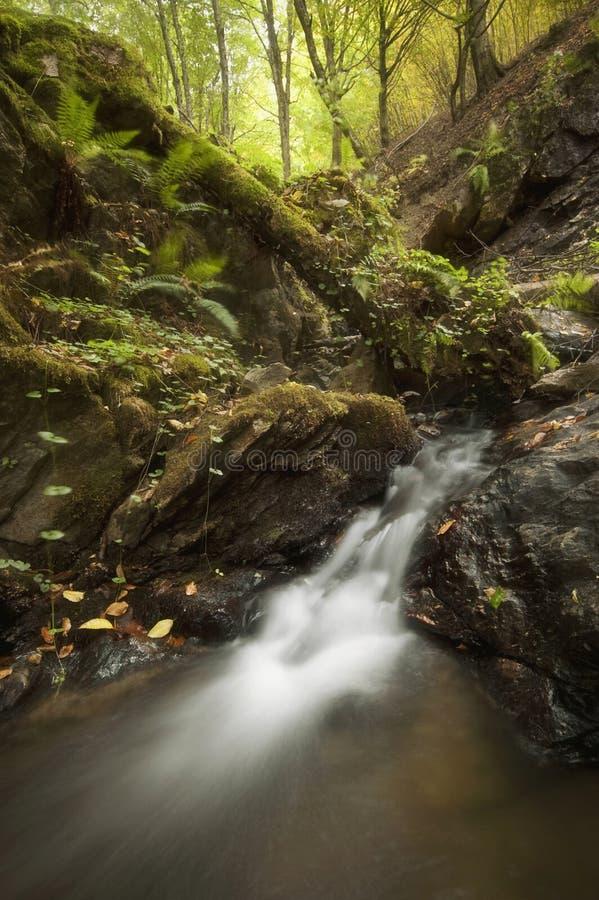 Cascada hermosa en el río de la montaña en un bosque en otoño imágenes de archivo libres de regalías