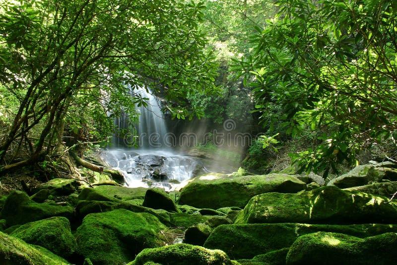 Cascada ocultada de la selva tropical imágenes de archivo libres de regalías