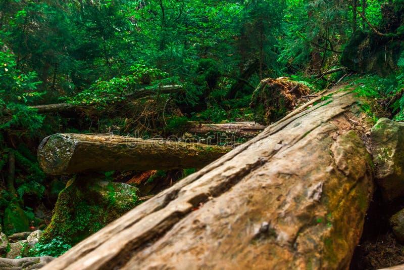 Cascada otoñal en corriente de la montaña El agua espumosa está cayendo sobre el canto rodado cubierto de musgo y las hojas corfu fotografía de archivo libre de regalías