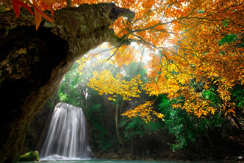 Cascada profunda del bosque foto de archivo