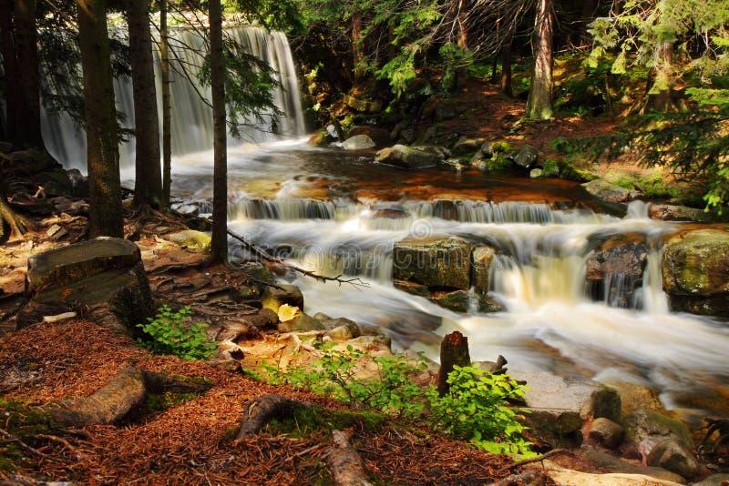 Cascada salvaje en el bosque, agua, corriente, piedras, reflexiones, naturaleza foto de archivo