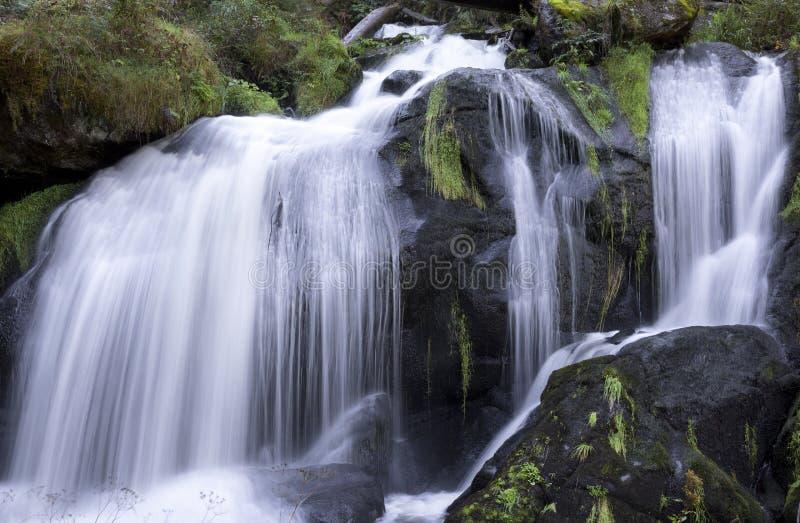 Cascada, Triberg, bosque negro, Alemania fotografía de archivo libre de regalías