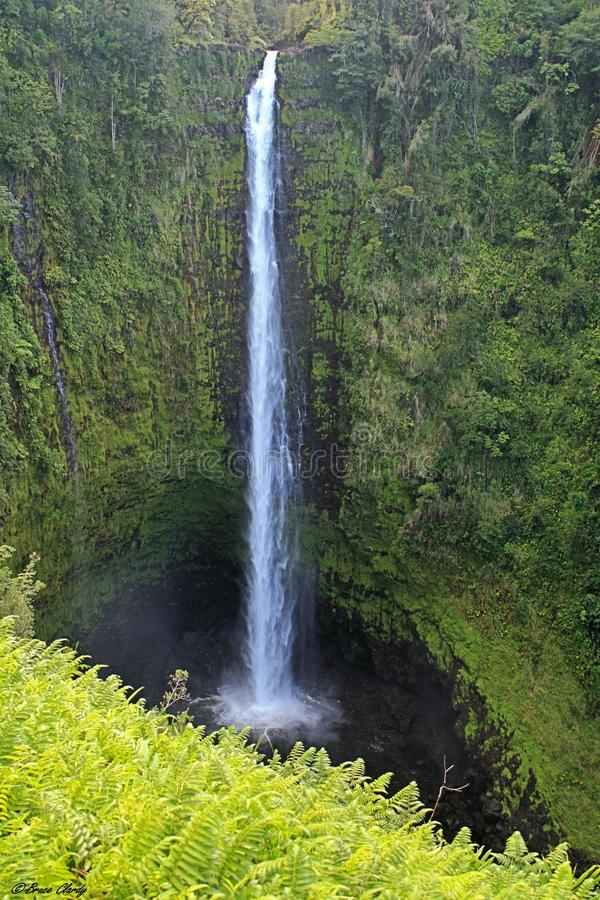Cascada tropical foto de archivo