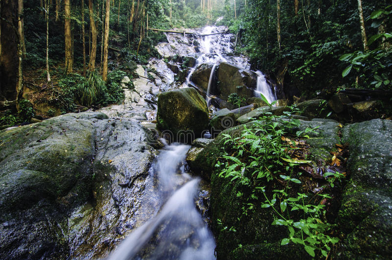 Cascada tropical de la selva tropical con rodeado por el follaje enorme y la roca cubierta de musgo verde fotografía de archivo libre de regalías