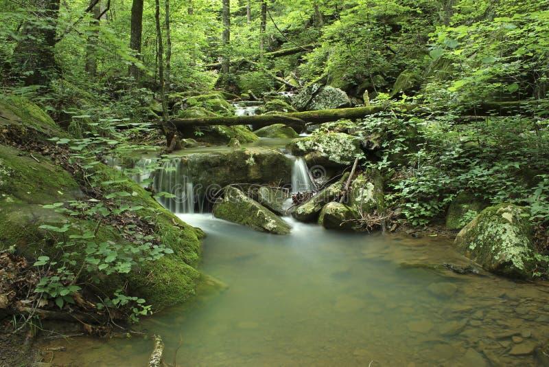 Cascada verde cubierta de musgo pacífica de Arkansas imagen de archivo libre de regalías