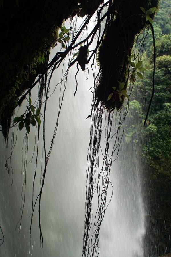 Cascada, vista de detrás, con las raíces colgando abajo fotografía de archivo libre de regalías
