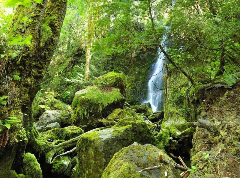 Cascada y Moss Covered Rocks hermosos en el nacional olímpico F fotografía de archivo