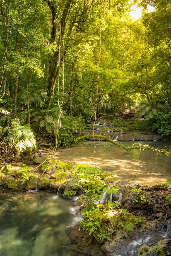 Cascadas de la selva de México foto de archivo libre de regalías