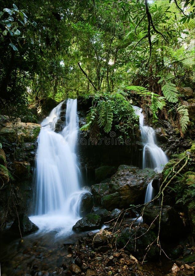 Cascadas del bosque de Bwindi. 2 imagen de archivo libre de regalías