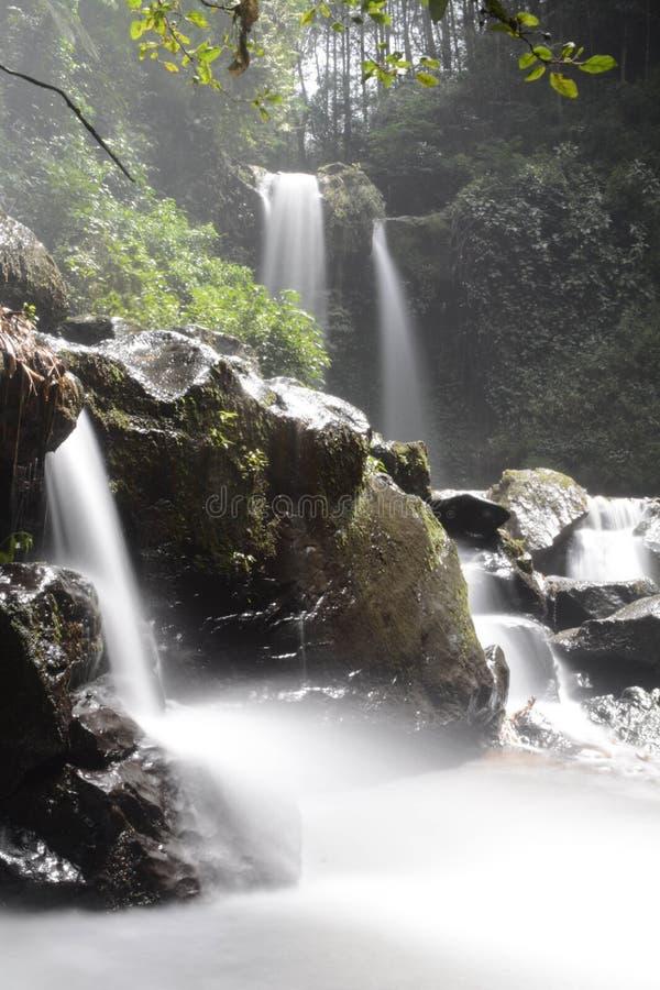 Cascadas hermosas en bosques tropicales foto de archivo