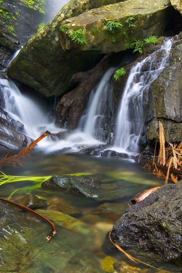Cascadas tropicales imagenes de archivo