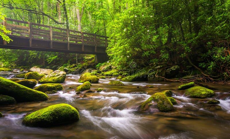 Cascadas y puente que camina sobre el río de Oconaluftee imagen de archivo libre de regalías