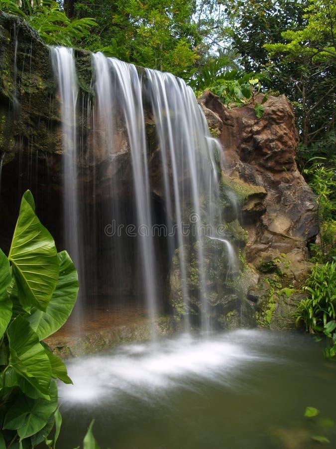 Cascade à écriture Ligne Par Ligne Au Jardin Botanique Photo libre de droits