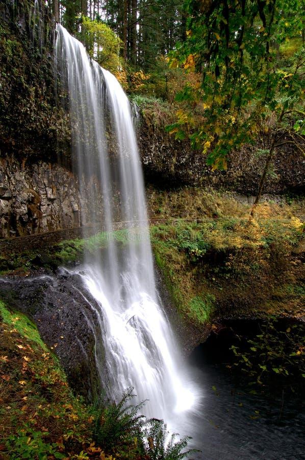 Cascade à écriture ligne par ligne avec des lames d'automne photo libre de droits