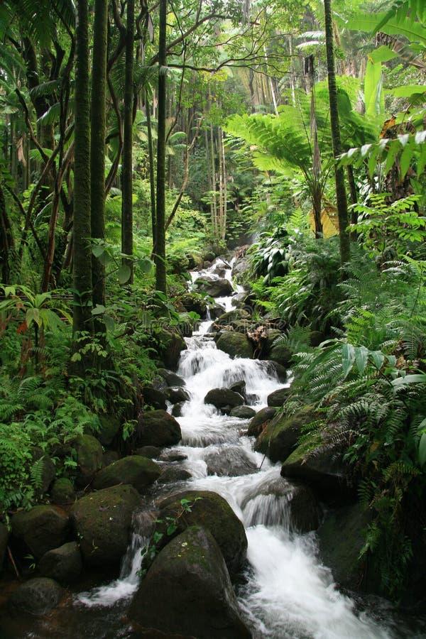 Cascade à écriture ligne par ligne d'Hawaï images stock