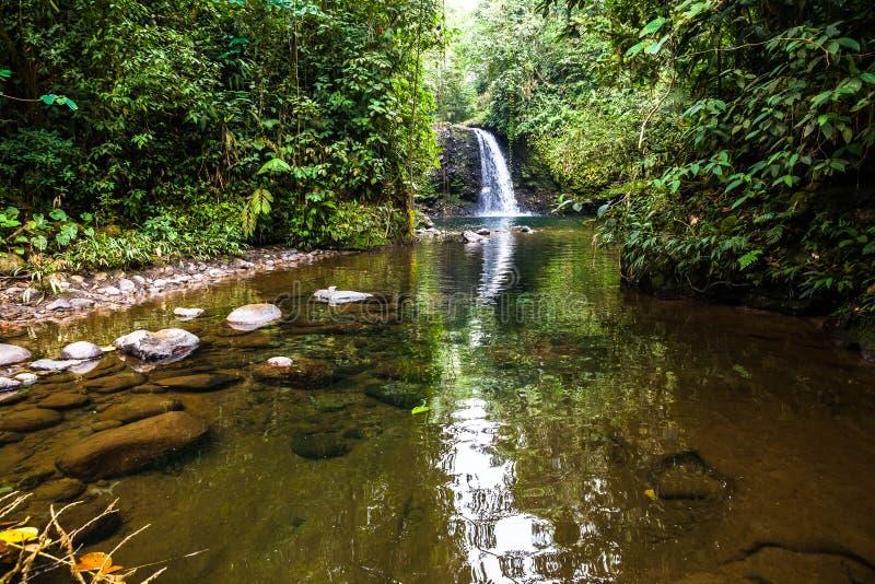 Cascade à écriture ligne par ligne dans la jungle photo stock