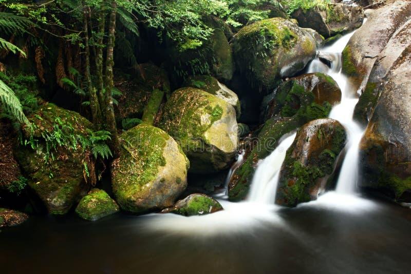 Cascade à écriture ligne par ligne de forêt humide images libres de droits