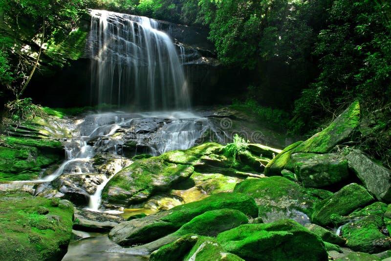 Cascade à écriture ligne par ligne de forêt tropicale photos stock