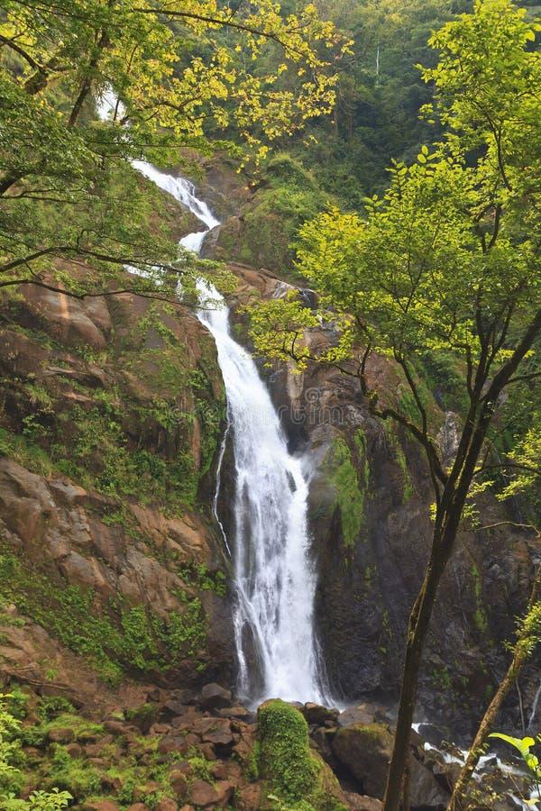 Cascade à écriture ligne par ligne de forêt tropicale de Rican de côte image libre de droits