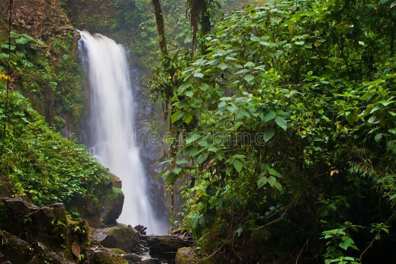 Cascade à écriture ligne par ligne de jungle images stock