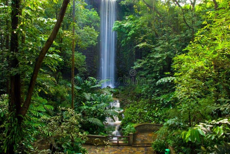 Cascade à écriture ligne par ligne de jungle images libres de droits