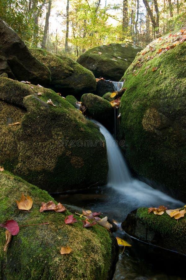 Cascade à écriture ligne par ligne en bois abondants d'automne photographie stock libre de droits