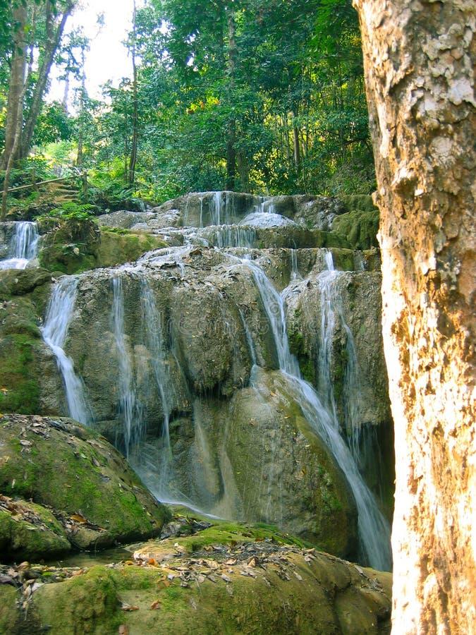 Cascade à écriture ligne par ligne paisible dans la forêt images libres de droits