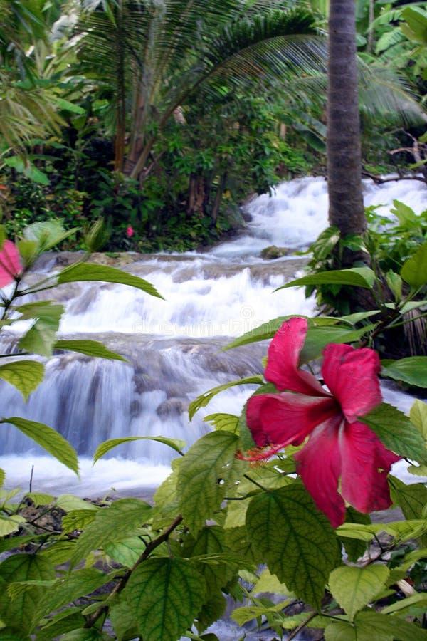 Cascade à écriture ligne par ligne tropicale photos libres de droits