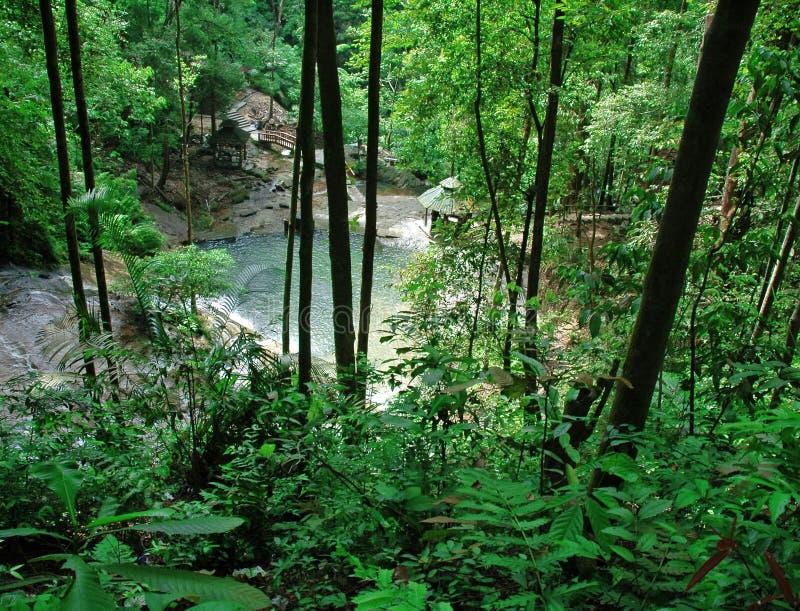 cascade à écriture ligne par ligne tropicale de forêt images libres de droits