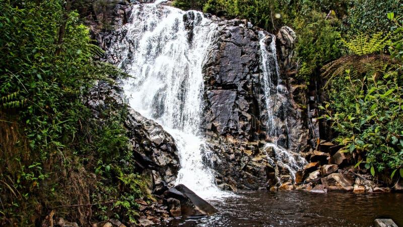 Cascade avec des bordures vertes luxuriantes photos libres de droits