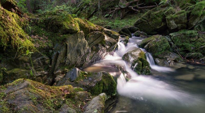 Cascade in bos royalty-vrije stock foto's