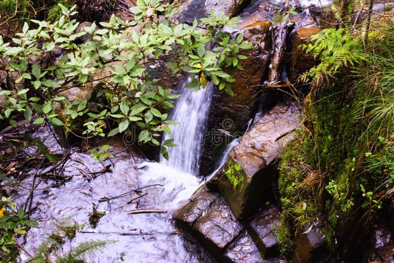 Cascade cachée en Olinda National Park images libres de droits