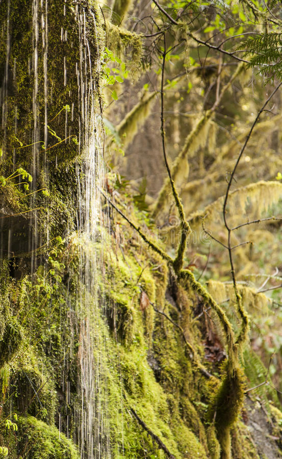 Cascade chez Eagle Creek Trail photo libre de droits
