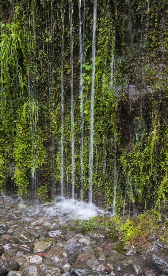 Cascade chez Eagle Creek Trail 1 photographie stock libre de droits