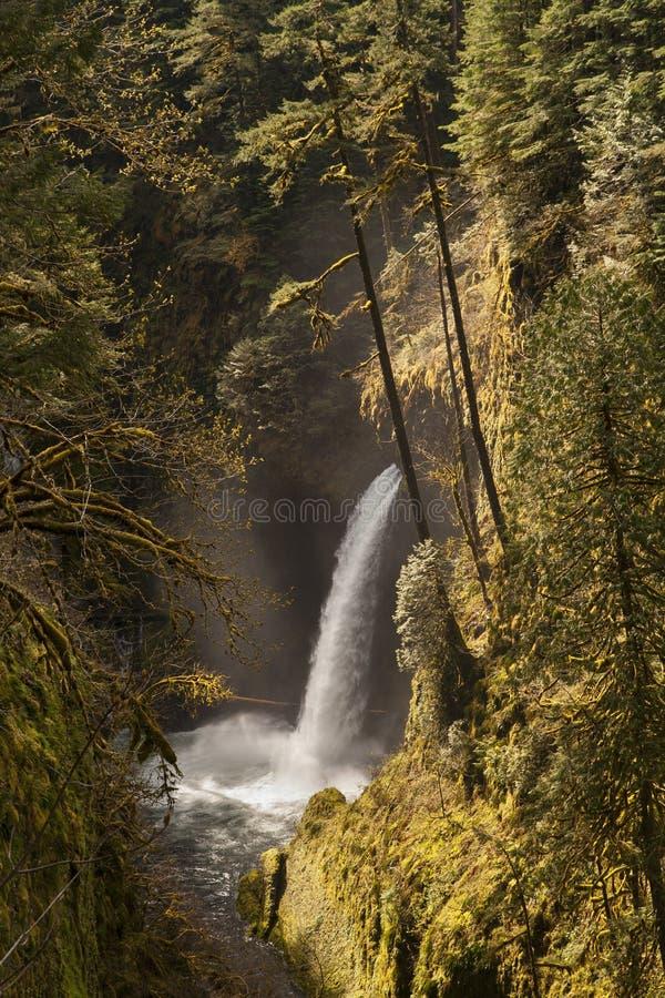 Cascade chez Eagle Creek Trail 5 image libre de droits