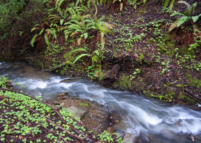 Download Cascade Creek stock image. Image of purity, flowing, background - 12766899