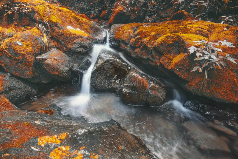 Cascade dans des feuilles d'automne avec la couleur vibrante photographie stock libre de droits