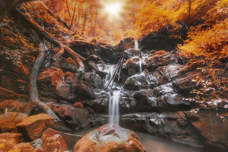 Cascade dans des feuilles d'automne avec le ton vibrant de couleur photos stock