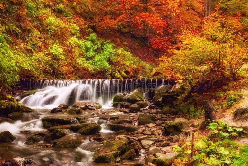 Cascade dans la forêt d'automne aux montagnes carpathiennes photos stock