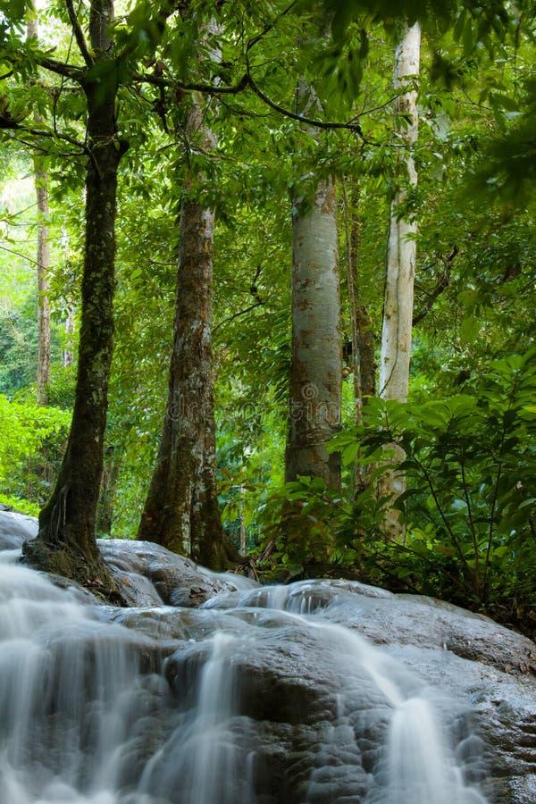 Cascade dans la forêt de la Thaïlande photos stock