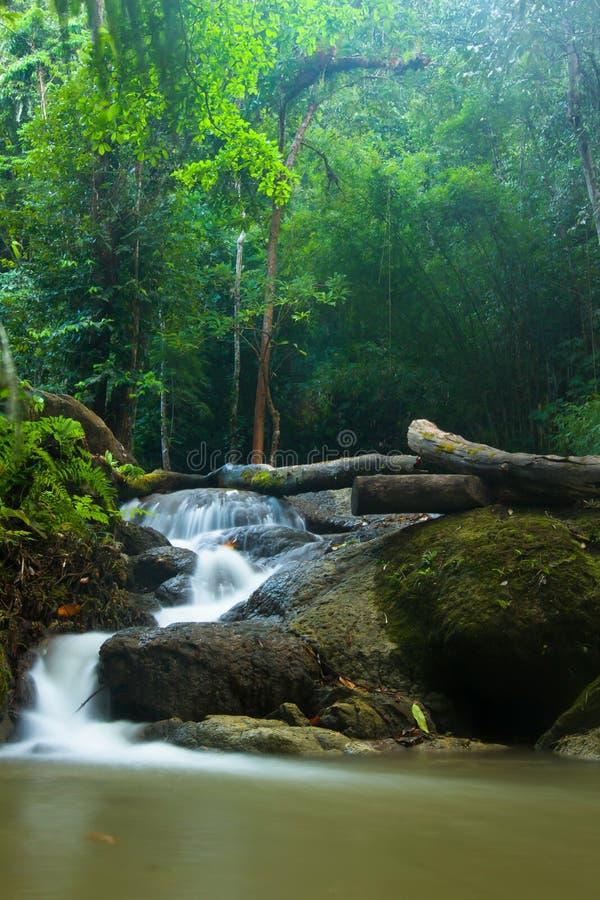 Cascade dans la forêt de la Thaïlande image libre de droits