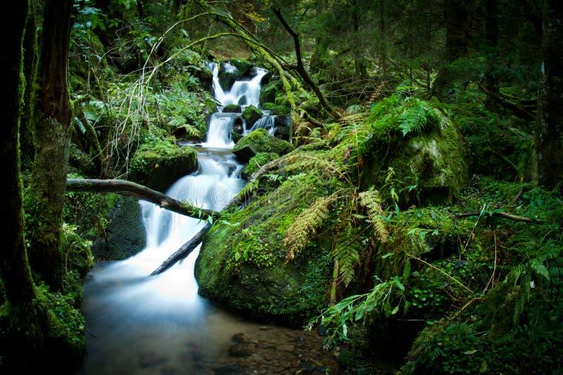 Cascade dans la forêt noire image stock
