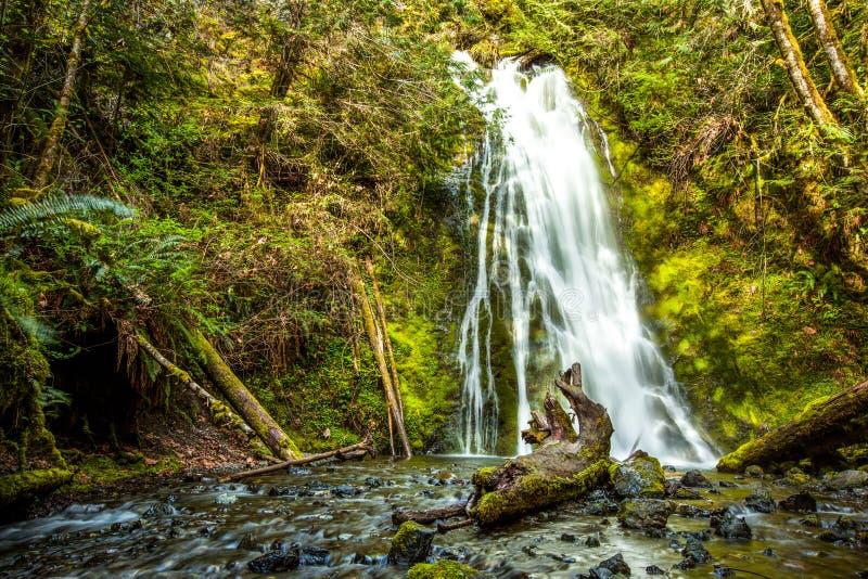 Cascade dans la forêt tropicale, parc national olympique photo stock