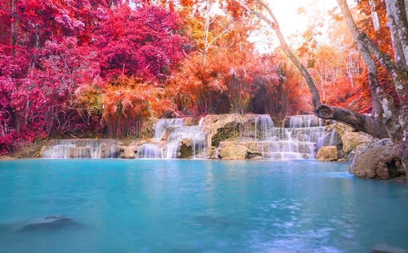 Cascade dans la forêt tropicale (Tat Kuang Si Waterfalls photographie stock libre de droits
