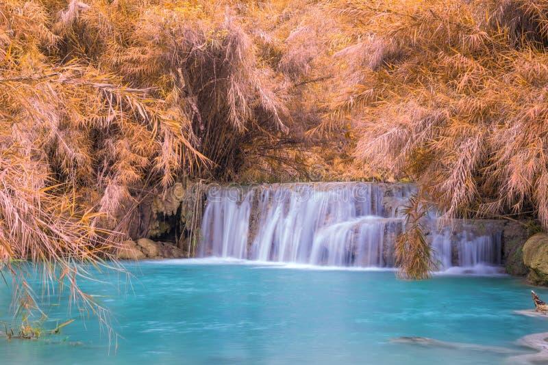 Cascade dans la forêt tropicale (Tat Kuang Si Waterfalls chez le Laos photo stock