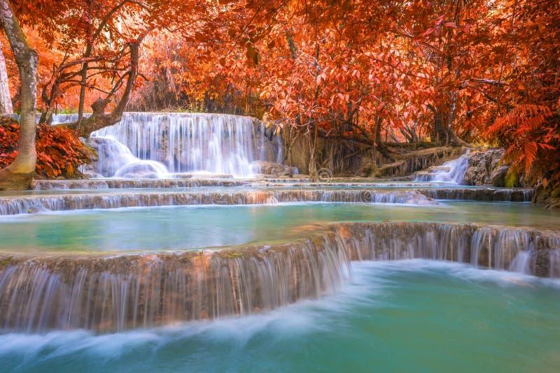 Cascade dans la forêt tropicale (Tat Kuang Si Waterfalls chez le Laos photographie stock libre de droits