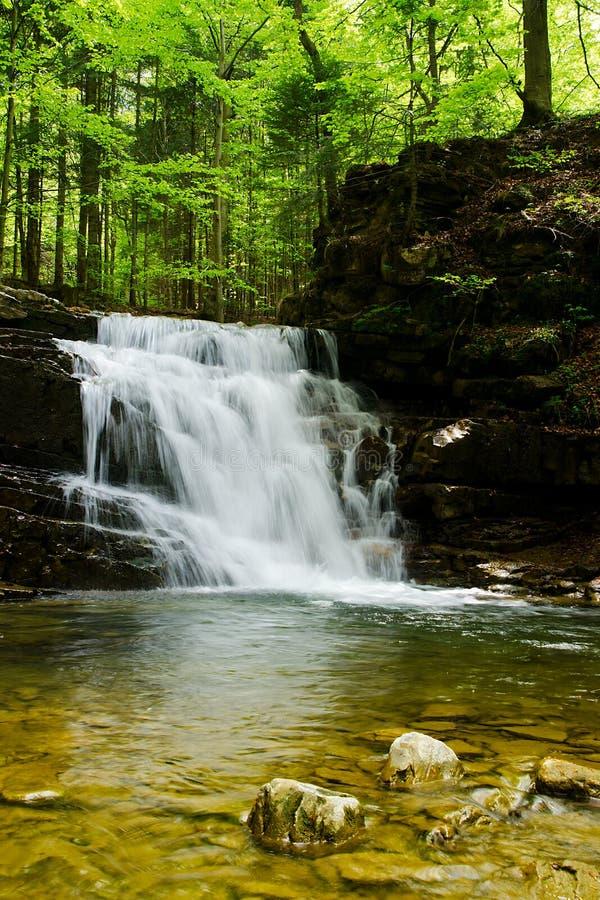 Cascade dans la forêt verte de ressort carpathienne image stock