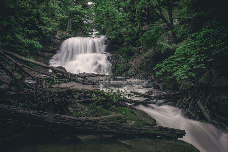 Cascade dans la région forestière inexploitée du Canada images libres de droits